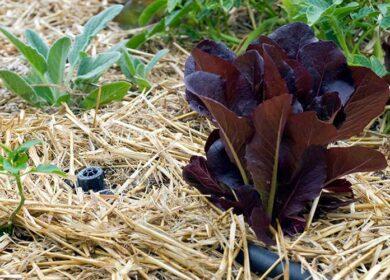Мульчуйте правильно! Коли і чим мульчувати рослини?