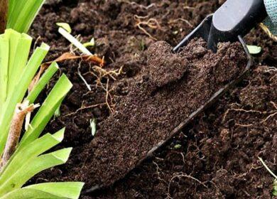Щоб дізнатися кислотність грунту, досить поглянути на одну рослину на городі