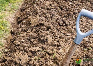 Як поліпшити глинистий грунт, щоб все росло як на чорноземі