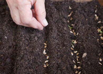 Глибина посіву та посадки овочів і квітів